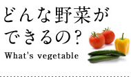 どんな野菜ができるの?