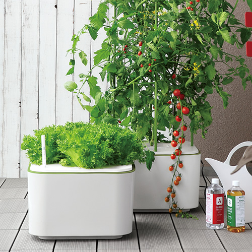 マンションのベランダで野菜作りを楽しむことができます