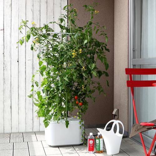 トマト、プチトマト、茄子、きゅうり、ゴーヤ、メロンなどが栽培できます。