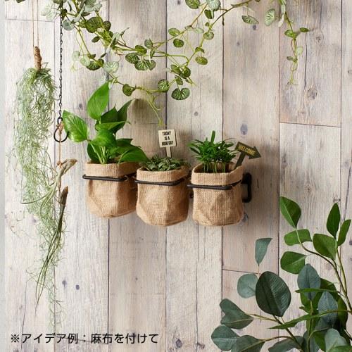 麻布と合わせて壁面緑化